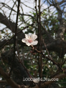 flower on mystery tree 2/21/15