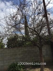 Mystery Tree 2/21/15